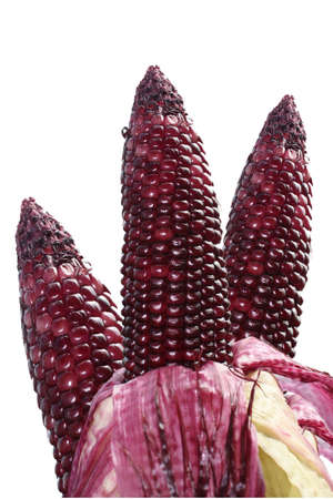 fresh Purple corn vegetable photo