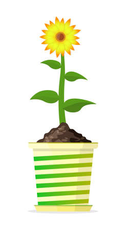 Tall healthy flower in a bright pot. Vector Illustration.