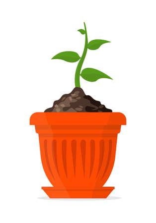 Plant in a orange pot. Vector Illustration. Illustration