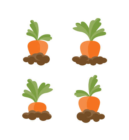 Set of different carrots isolated on the white background. Vector Illustration.