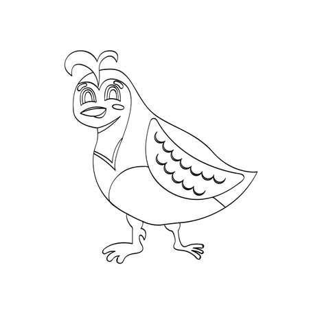 Illustration of cartoon quail bird for kids drawing. Vettoriali