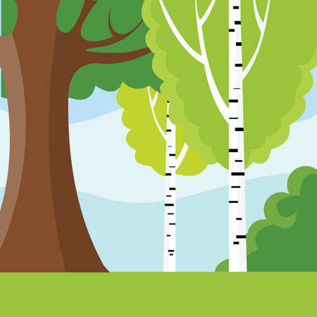Racy forest glade with birches. Vector Illustration.