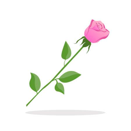 Pink rose on white background. Valentine day isolated on plain background.