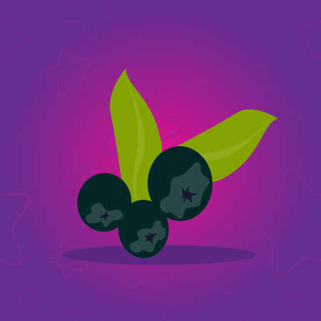 Bunch of fresh blackcurrants on violet background with star pattern. Vector Illustration.