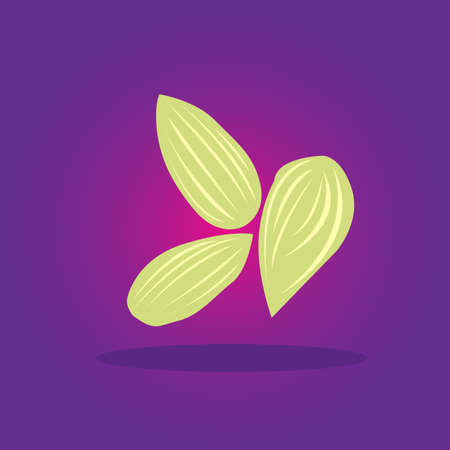 Pods of true green cardamom on violet background. Vector Illustration.
