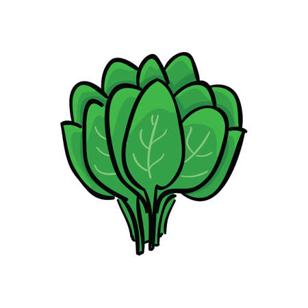Bunch of green sorrel isolated on white background. Vegetables vector illustration.
