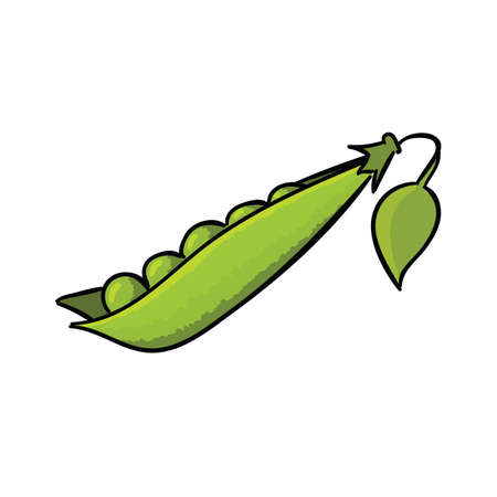 Raw fresh pea pod isolated on white background. Vegetables vector illustration.