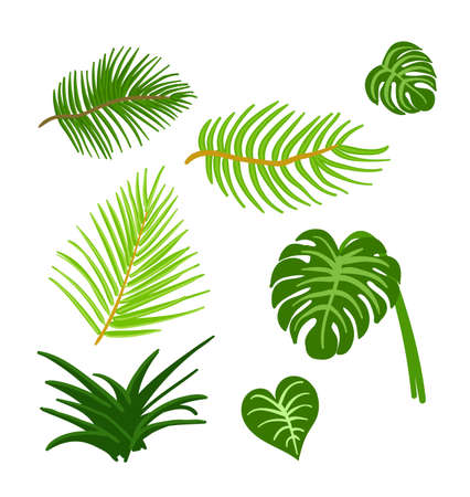 Tropical Leaves isolated set on the white background.