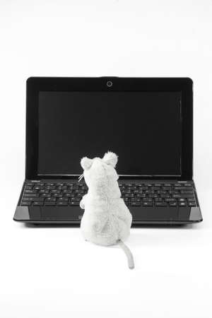 Laptop and a toy mouse on a white background photo