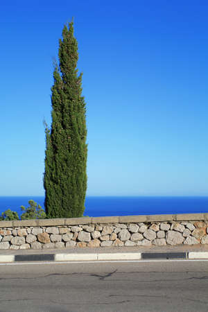 Cypress and road with markings, with a sea view