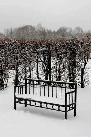 Snow-covered bench on the background of the bush in the winter park  photo