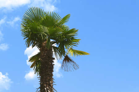 A fragment of a palm tree against a blue sky photo