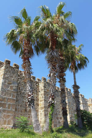Fragment of a wall of an old fortress and growing palms  Architecture, exterior  photo