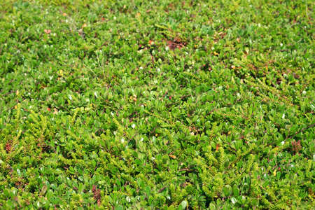 Texture of a young green grass and moss. Background, texture, flora