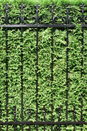 Fragment of the building fence overgrown with plants. Exterior, architecture