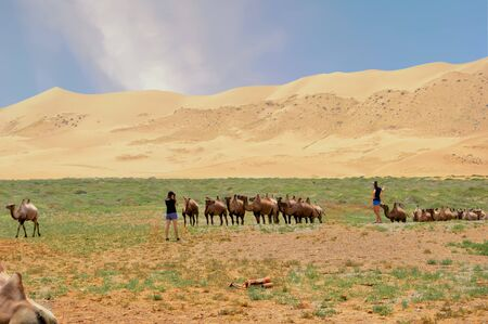 Camels Smile For Picture Takers Near Sand Dunes in Mongolia.