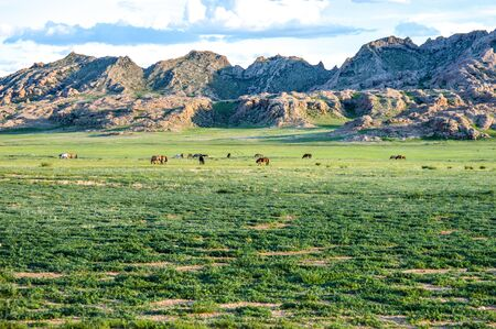 Horses In Early Morning On Steppes of Mongolia grazing in the Valley