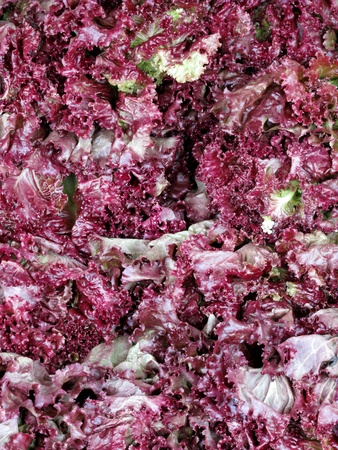 fresh red lettuces photo