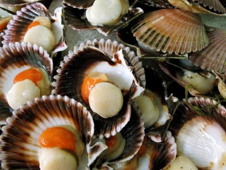 Fresh fan shells Stockfoto