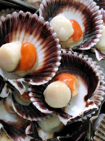 fan shaped: Fresh fan shells Stock Photo