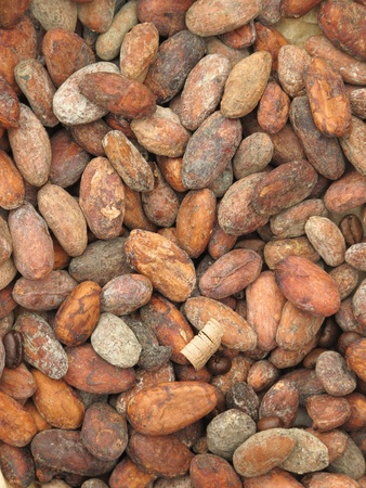 Cacao beans Stock Photo - 11294304