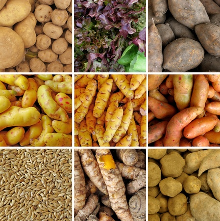 Group of peruvian vegetables photo