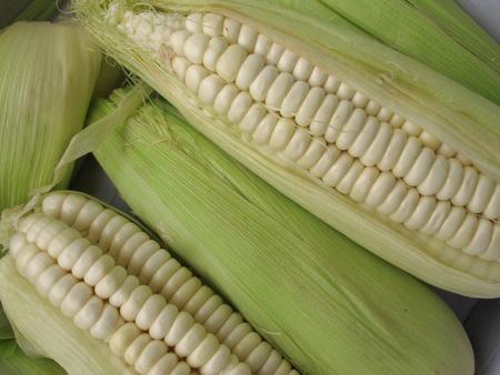 Corn cob Banque d'images