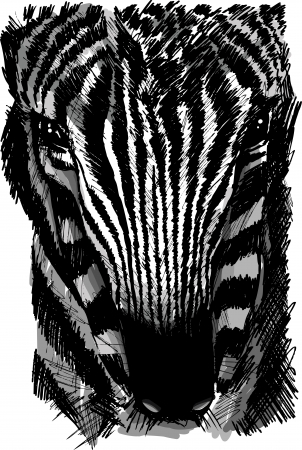 wildlife reserve: Sketch of a zebra head. Vector illustration