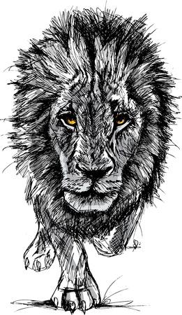 Croquis d'un grand lion d'Afrique masculin. Illustration