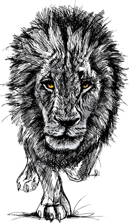 Sketch of a big male African lion. Vector