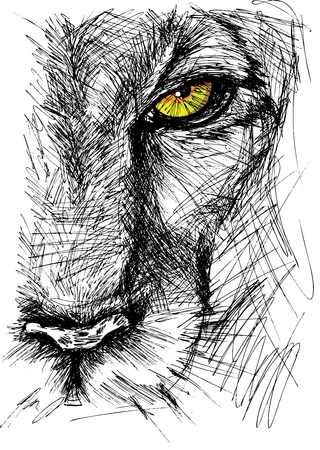 Hand drawn Sketch of a lion looking intently at the camera.  Illustration
