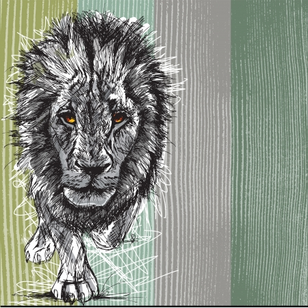 Sketch of a big male African lion Vector