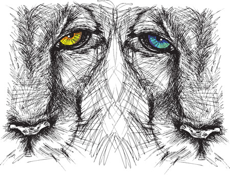 lioness: Hand drawn Sketch of a lion looking intently at the camera