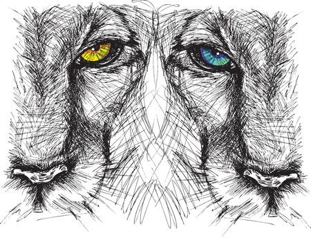 panthera: Schizzo disegnato a mano di un leone guardando intensamente la fotocamera
