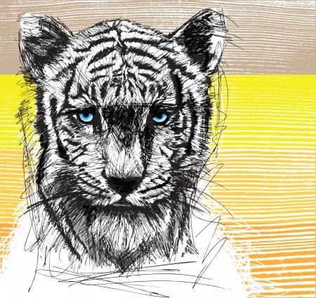 sumatran: Sketch of white tiger