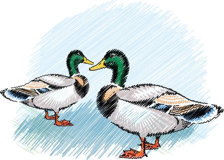 Ducks on a farm Vector