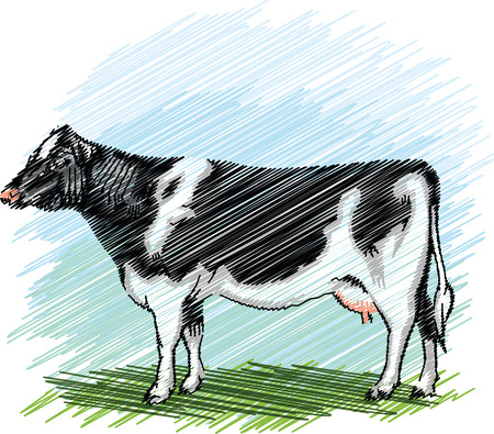 cows grazing: Holstein cow illustration