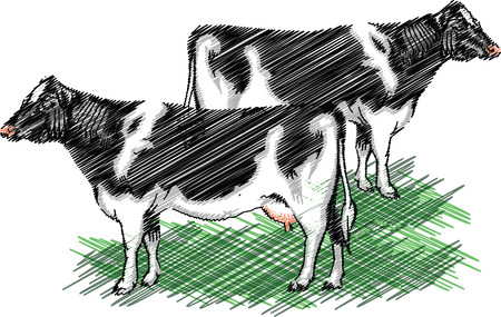 Holstein cow illustration Vector