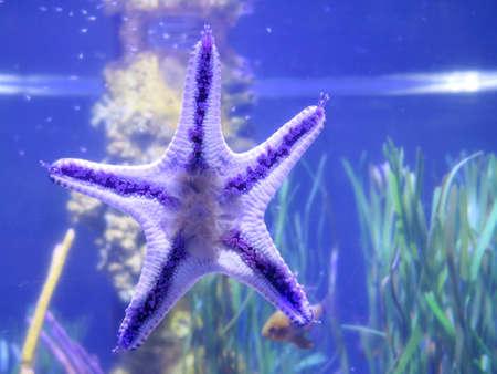 fishbowl: Starfish on fishbowl