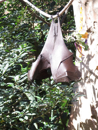 chap: Bat Animal Hanging From a Tree