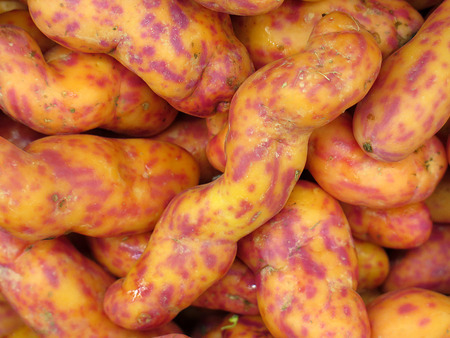 Red Olluquito. Peruvian tuber for sale at the Farmers Market photo