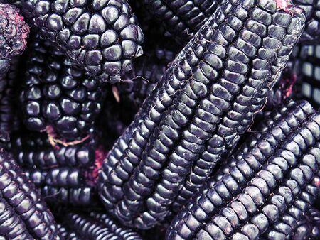 mazorca de maiz: pila de ma�z morado peruano fondo Foto de archivo