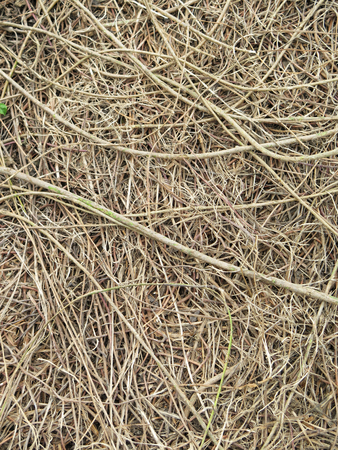 fertile: close up roots with fertile soil background Stock Photo