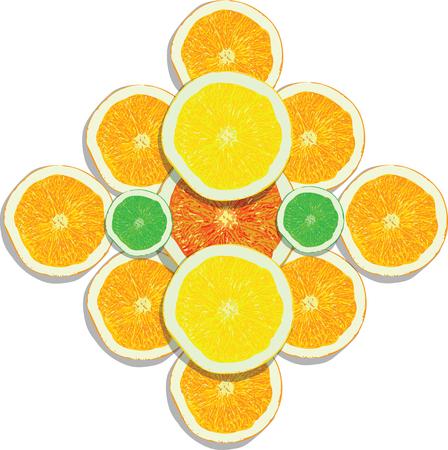 Hand drawn lemon, orange, lime, grapefruit slices on white background vector illustration