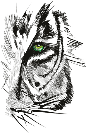 Sketch of tiger face vector illustration Illustration