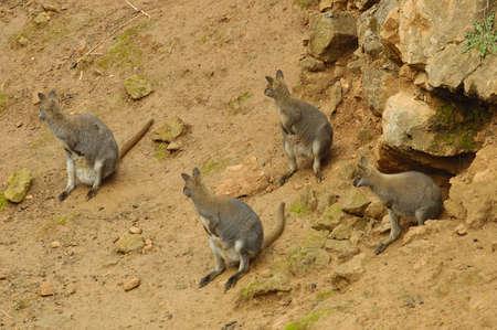 cantabria: cabarceno park animal in cantabria north spain
