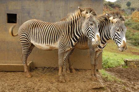 cabarceno park animal in cantabria north spain