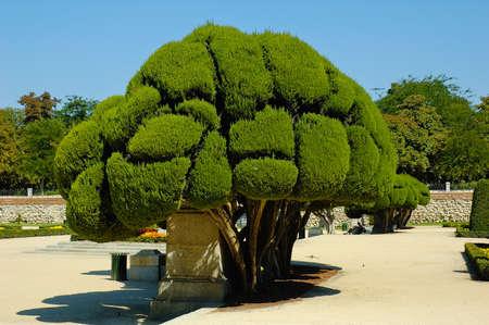 Enchanted forest in Retiro park Madrid Spain