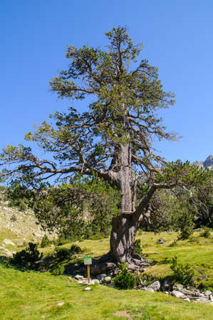 Aiguestortes is a National Park in Catalonia Spain Stock Photo