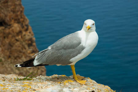 Gull near the sea on the rock